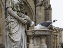 Pigeon Drinking from a Sculpture Fountain Royalty Free Stock Photography
