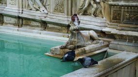 Pigeon drinking water from the historic fountain in Italy Royalty Free Stock Photography