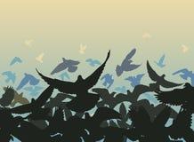 Pigeon edge Stock Image