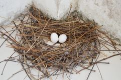 Pigeon egg on the nest Stock Photos