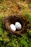 Pigeon eggs. In nest looking beautiful stock photo