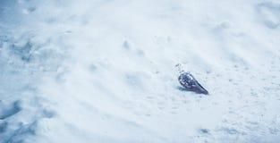 Pigeon en hiver Photographie stock libre de droits