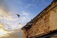 Pigeon en vol au-dessus des toits de la vieille ville Photographie stock libre de droits