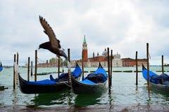 Pigeon et île San Giorgio Maggiore images libres de droits