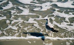 Pigeon et sa plage Image libre de droits