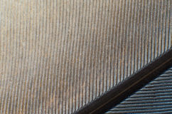Pigeon feather close-up background texture Royalty Free Stock Photo