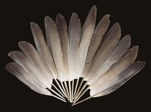 Pigeon feathers royalty free stock image