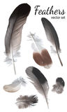Pigeon Feathers Collection, High Quality Vector Royalty Free Stock Photography
