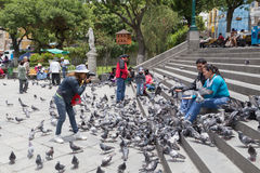 Free Pigeon Feeding On Plaza Murillo In La Paz, Bolivia Stock Photo - 72355750