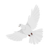 Pigeon Flat Design Vector Illustration. Pigeon vector. Religion, wedding, peace, pacifism, concept in flat design. Illustration for religion attributes Stock Image