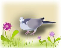 Pigeon and  Flowers. Stock Photo