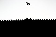 Pigeon flying off the roof of palace Stock Photography