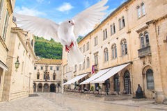 Pigeon flying over Stradun - the central street of the old city of Dubrovnik, Croatia stock images
