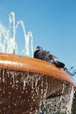 Pigeon on a fountain Royalty Free Stock Photos