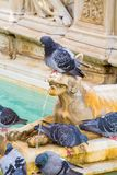 Pigeon on the fountain sculpture Stock Photos