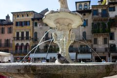 Pigeon on fountain in Verona Stock Photography