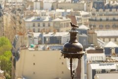 Pigeon in front of Paris roofs. Pigeon sitting on a lamp post, in front of a view on parisian walls Stock Photos