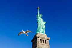 Pigeon in front of Statue of Liberty at perfect weather conditio Royalty Free Stock Image