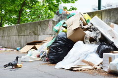 Pigeon guarding a piece of bread next to garbage bag and a pile stock photography
