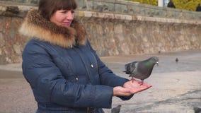 Pigeon in the hands of women.  stock video