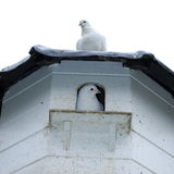 Pigeon house Stock Photography