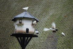 Pigeon house. Bird house with pigeons and beautiful old roof in background Royalty Free Stock Image