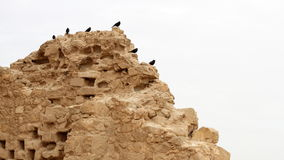 Pigeon house at Masada, Israel Stock Photography