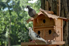 Pigeon-house Royalty Free Stock Image