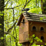 Pigeon house Stock Images