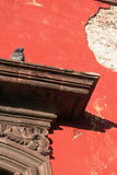 Pigeon on ledge. Pigeon on ornate ledge against red crumbling wall in Central America Royalty Free Stock Image