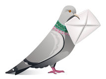 Pigeon With Letter stock photos