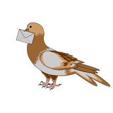 A pigeon with a letter on a white background Royalty Free Stock Photography