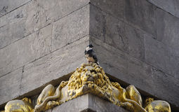Pigeon on lion head. Speckled pigeon on gold lion head Stock Photography