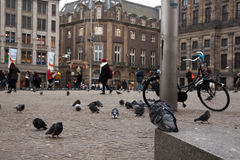 A pigeon looking at the Dam in Amsterdam Royalty Free Stock Photography