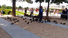 A pigeon man within the Place du Carrousel stock photography