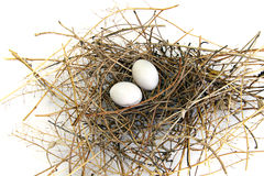 Pigeon nest Royalty Free Stock Photography