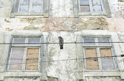 Pigeon in old house Royalty Free Stock Photo