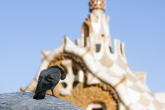 pigeon of parc guell Stock Photos