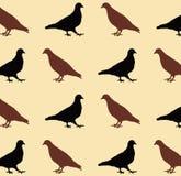 Pigeon pattern Stock Photo