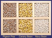 Pigeon Pea, Carany Bean, and Navy Bean Stock Image