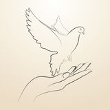Pigeon of peace flying from the open hands sketch in black lines Royalty Free Stock Photography