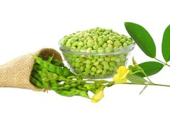 pigeon peas with leaves royalty free stock photo