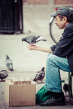 Pigeon perched on hand of seeds seller. Stock Photos