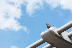 Pigeon perching on the Millennium Bridge Royalty Free Stock Photography