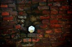 Pigeon Stock Image