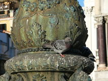 Pigeon on the pillar in San Mark's Square Stock Image