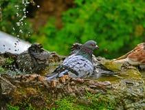 Bird playing in water Royalty Free Stock Photos