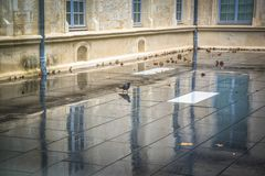 Pigeon in rain on roof terrace, Montpellier, France royalty free stock image