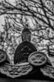 A pigeon on a roof tile Stock Images