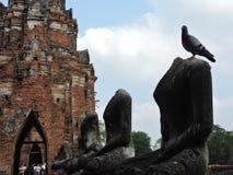 Pigeon on sculpture stock photo